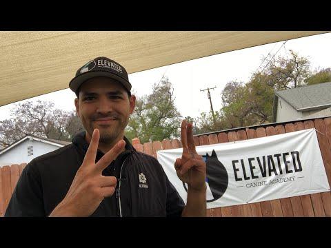 Questions w/ Dog Trainer Oscar Mora