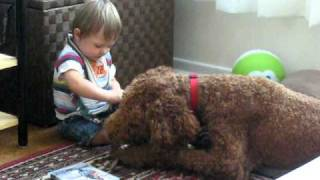 Baby Niko learns how to play with Frasier by dangling the dog toy. ...