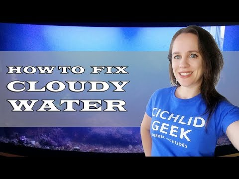 How To Fix Cloudy White Aquarium Water