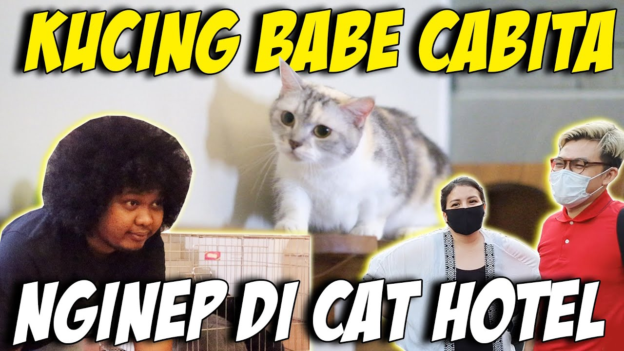 BABE CABITA BAWA BANYAK KUCING UNTUK NGINEP DI CAT HOTEL ! KUCING JENIS APA YAH ?