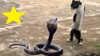 Download Snake vs Cat real figh  Highlight.