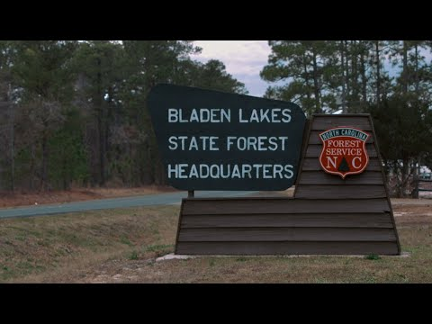 The Arbor Day Foundation And #TeamTrees Planting: Bladen Lakes State Forest