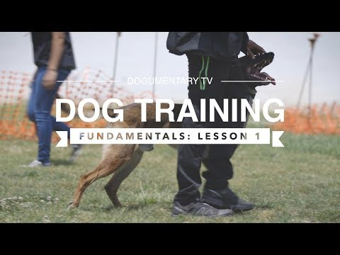 dog-training-fundamentals:-lesson-1