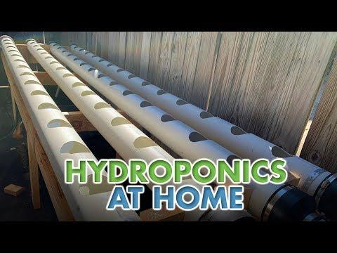 Hydroponics at Home