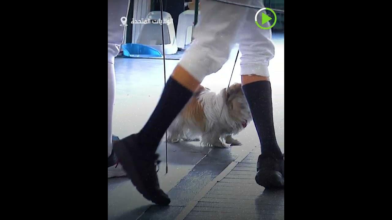 ناد رياضي مع حيوانات أليفة  - نشر قبل 40 دقيقة