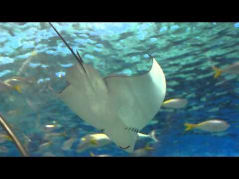 Manila Ocean Park - Oceanarium 06
