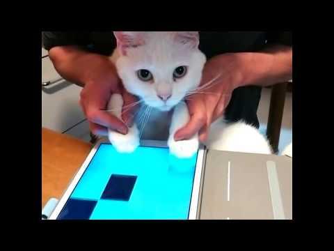 ピアノタイル2  白猫演奏 白猫てんちゃんのジングルベル