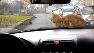 бесплатное видео приколы про котов