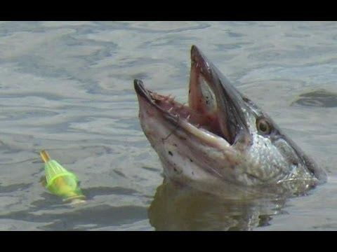 Fishing waubay area south dakota doovi for Webster sd fishing report