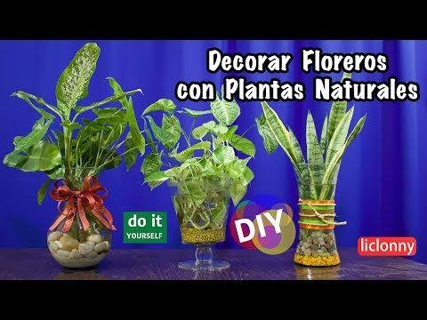 Cómo Decorar Con Plantas Naturales En Agua Floreros De Cristal Decorar Liclonny Youtube