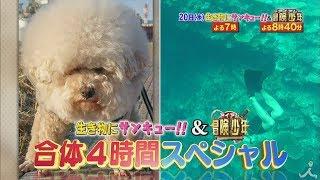 9月20日(水)よる7時から『生き物にサンキュー&アイ·アム·冒険少年』合...