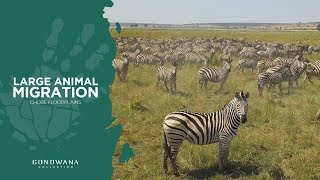 Great Animal Migration In North Eastern Namibia