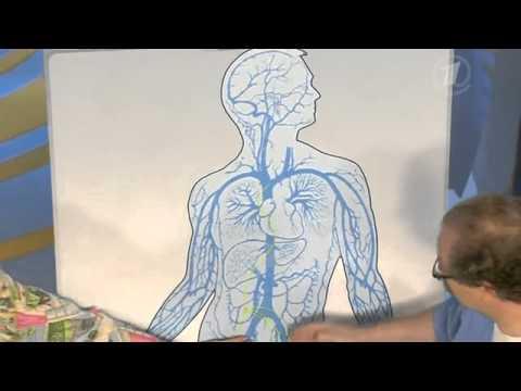 Инфекционный мононуклеоз - симптомы болезни, профилактика