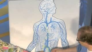 Инфекционный мононуклеоз. Поцелуйная болезнь(, 2014-07-07T08:40:36.000Z)