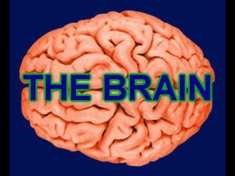 The Brain Rap
