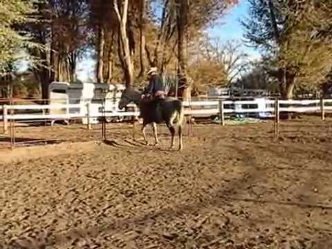 """Isabella"", Andalusian/Arabian cross Rescue , 5th Ride, Sean Davies, Coloradoreinsman"