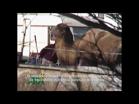 Stop Circus Suffering (French)