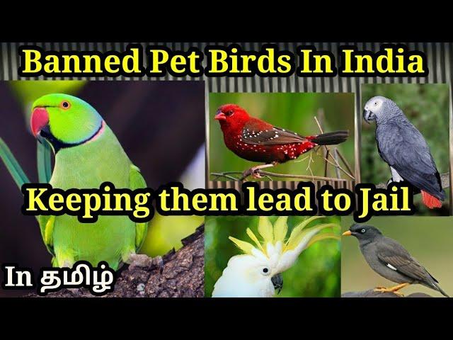 Banned Pet Birds In India 2018 À®¤à®® À®´ Youtube
