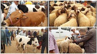 بشحال الحولي؟ أثمنة أضاحي عيد الأضحى 2018 في سوق عين تاوجطات