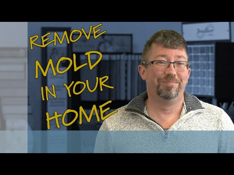 remove-mold-in-your-home-(safely!)