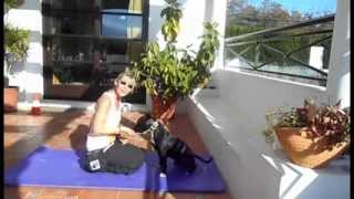 Ppg Video 2.  With Jambo - Staffy Bull Terrier Trick Dog.