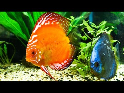 How To Control Ammonia In A Fish Tank | Aquarium Care