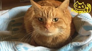 ガレージ2階のひろし隠れ家が妹猫タマに見つかってしまいました。 まぁ...