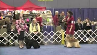 Jr. Showmanship - 2014 Flushing Spaniel Show