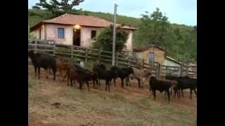 Reportagem Globo Rural 2003 ''MUTIRÃO do Porco na Serra da Canastra'' Delfinópolis mg