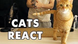 CATS REACT TO ASMR TRIGGERS