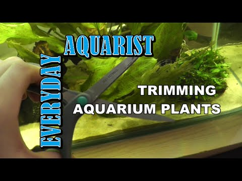 How To Cut Aquarium Plants