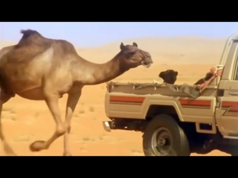 Eye of the Camel (Nature Documentary)