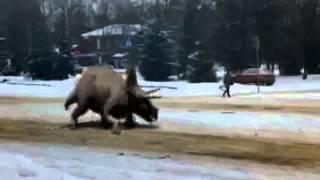 Динозавры в Костроме