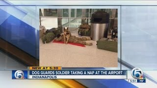 Dog Guards Soldier Taking A Nap At The Airport