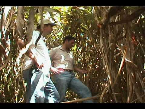 Guatemala Cardamom Farming 2000