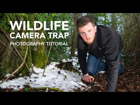 WILDLIFE CAMERA TRAP - Photography Tutorial