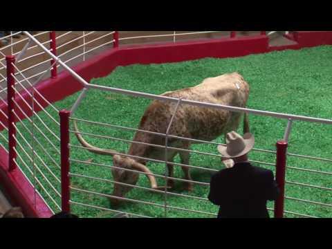 Longhorn Auction FRI
