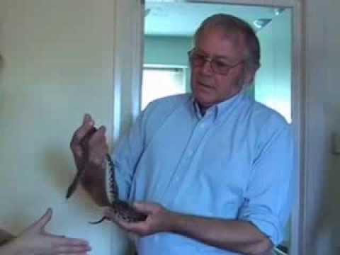 Watch Mark Tyrrell cure snake phobia...