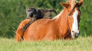 Incredible Friendship Between A Horse And A Baboon