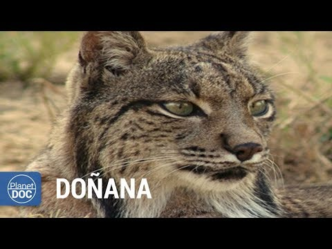Doñana National Park (Spain). Full Documentary