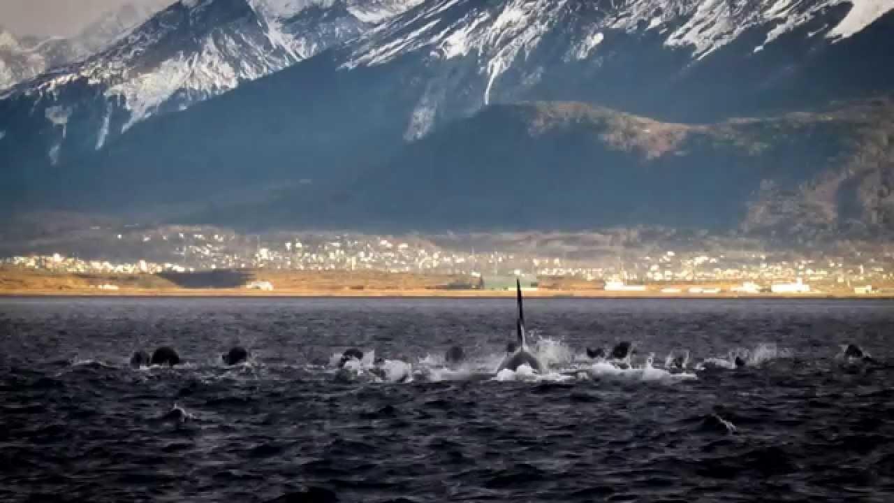 Four Seasons Rv >> Orcas en Ushuaia - YouTube