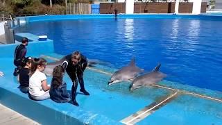 Espectáculo con delfines en el oceanográfico de Valencia