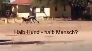 Hoax? - Halb Hund, halb Mensch