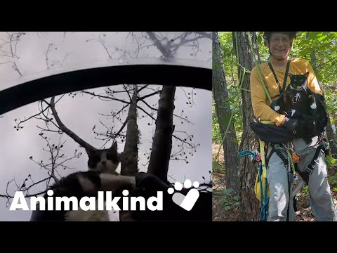 Man climbs trees to save stranded cats   Animalkind
