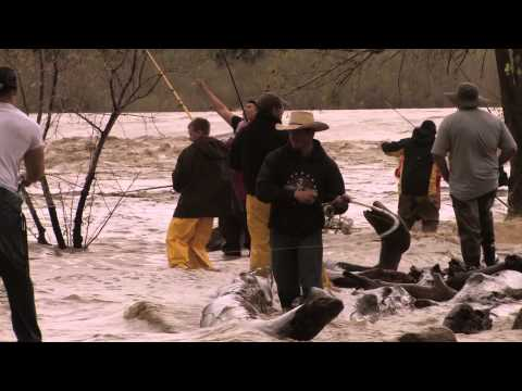 Glendive Paddlefish - Fishing Mayhem In Dinosaurville Montana