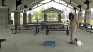 Puppy Training 3: Lilly Havanese, Distraction Training Park