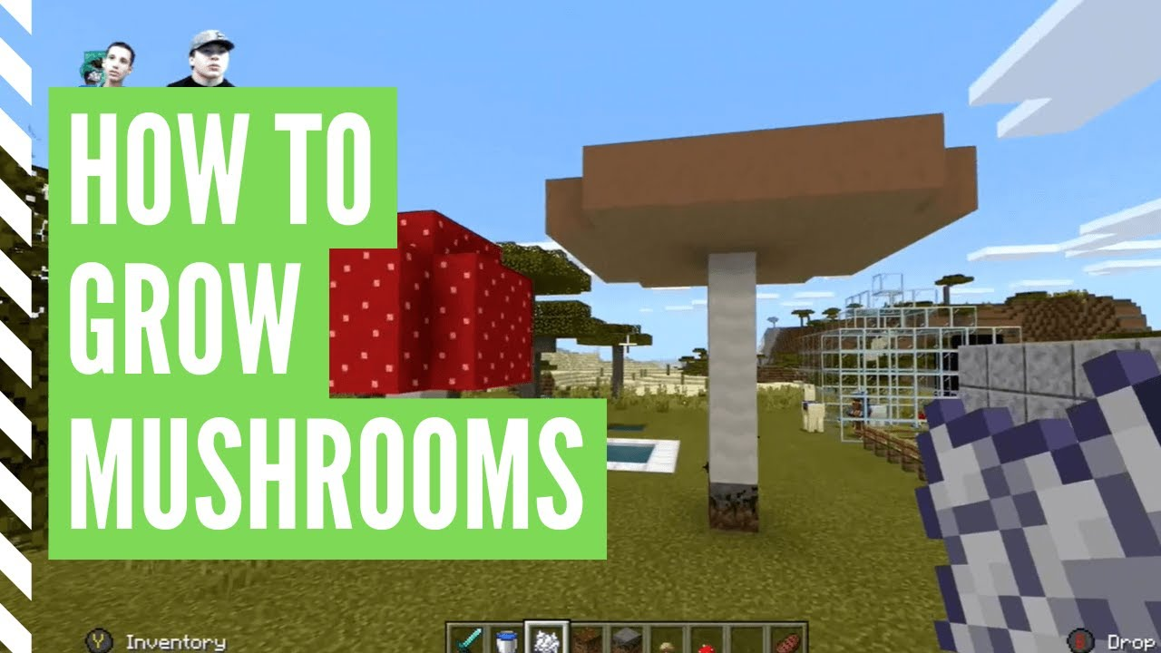 How To Grow MUSHROOMS In Minecraft (And Find Them) - YouTube