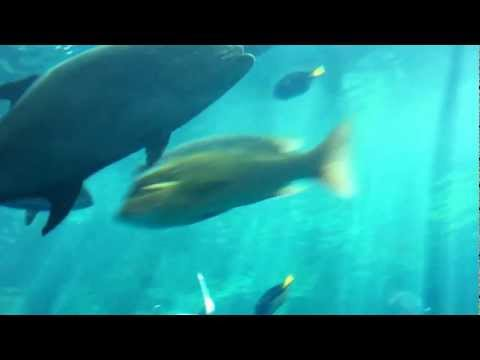 Aquarium of the Pacific - Tropical Pacific Gallery (Video 1 of 2)