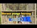 Kutilang Isian Full Kacer Jangan Di Sepelekan Masteran(.mp3 .mp4) Mp3 - Mp4 Download