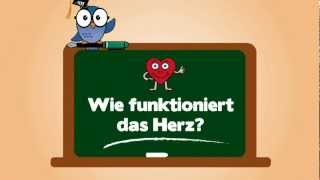 KIT for Kids: Wie funktioniert das Herz?